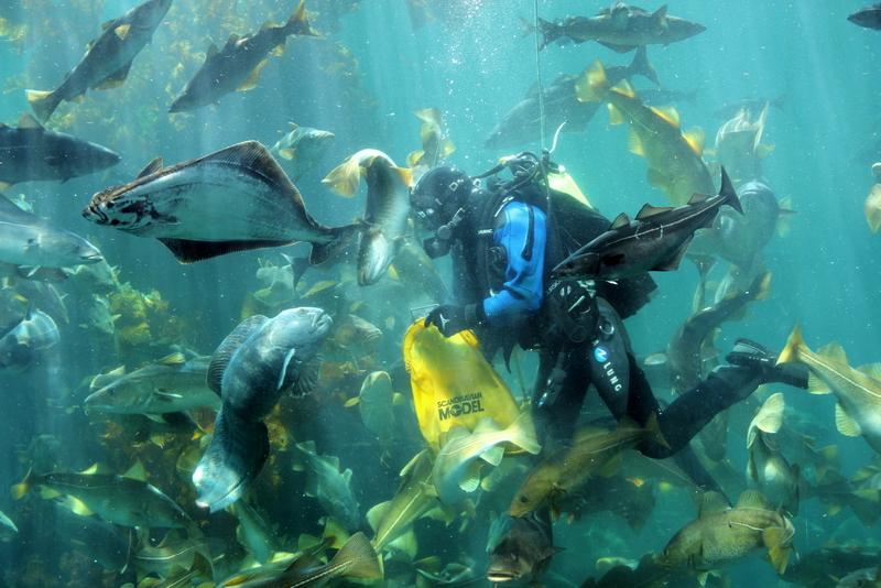Moje volba: Mořské akvárium v Ålesundu