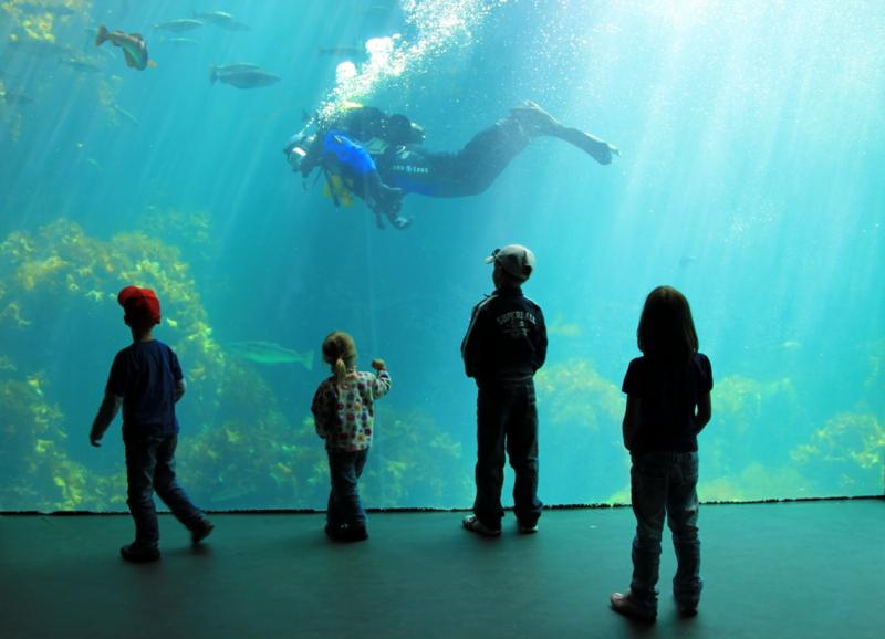 Moje volba: Potapěč v mořském akváriu v Ålesundu